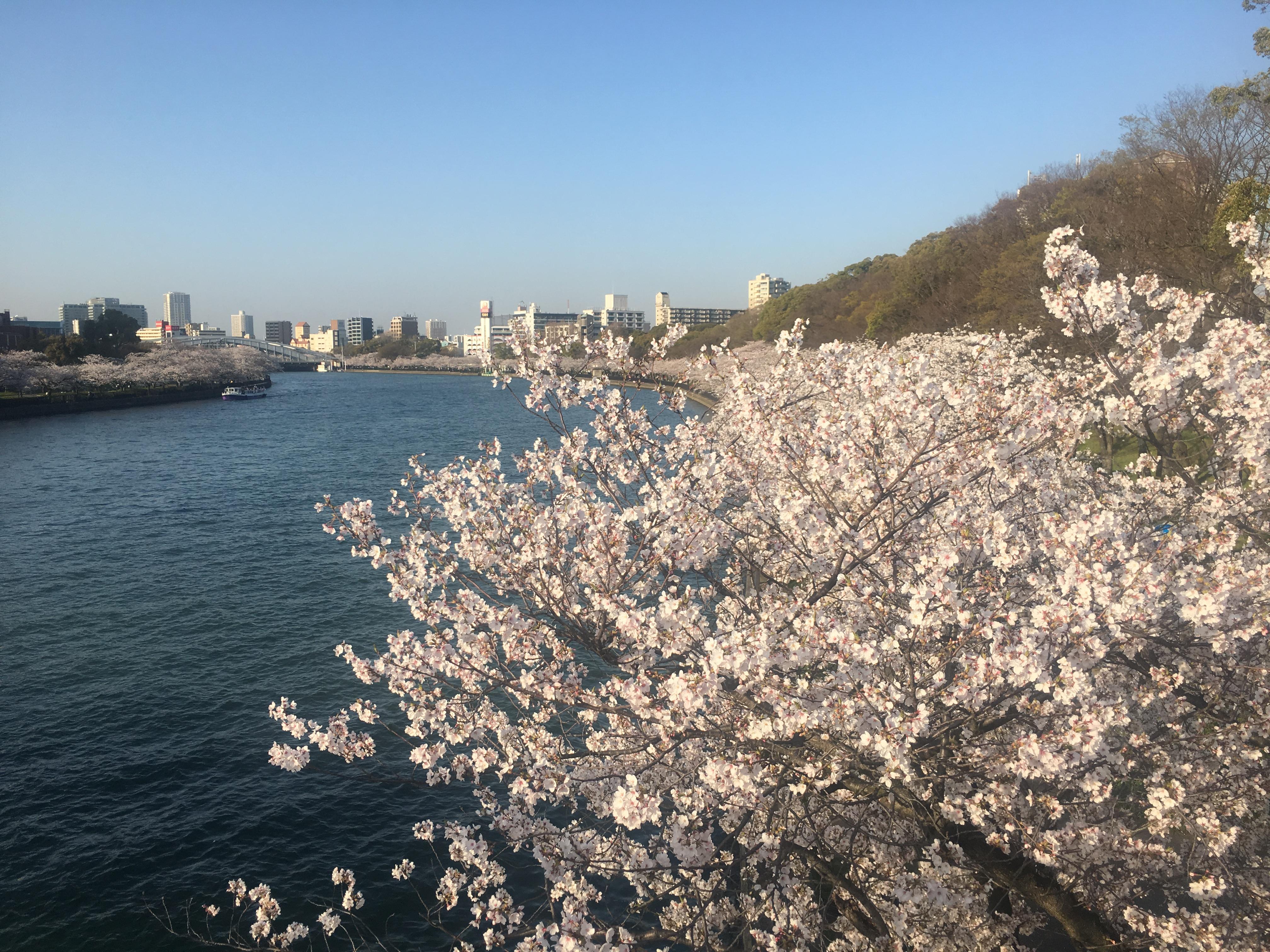 桜【3月28日撮影】